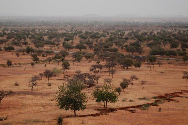 Półpustynna strefa Sahelu