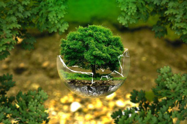 Olimpiada biologiczna, na przykładzie drzewna w szklanej kuli