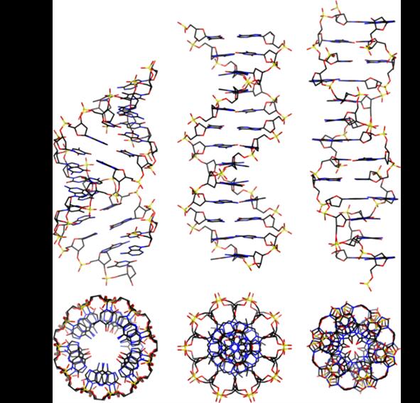 Alternatywne zastosowanie DNA na przykładzie budowy przestrzennej helis